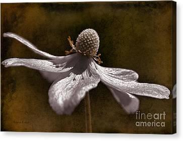 Dancing In The Breeze Canvas Print by Deborah Benoit
