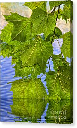 Dangling Leaves Canvas Print by Deborah Benoit