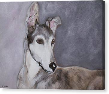 Rescued Greyhound Canvas Print - Daniel by George Pedro