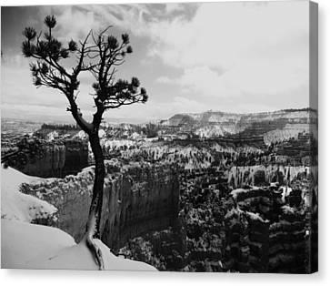 Dan's Eye View Of Bryce Canvas Print
