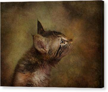 Daphne In Profile Canvas Print by Pat Abbott