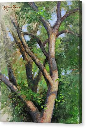 Early Morning Canvas Print - Dappled Woods by Anna Rose Bain