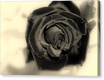 Canvas Print featuring the photograph Dark Beauty by Kay Novy