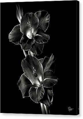 Dark Gladiolas In Black And White Canvas Print