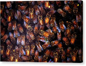 Dark Swarm Attack Canvas Print