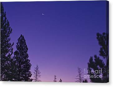 Dawn From My Window Canvas Print by Janie Johnson