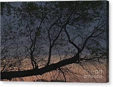 Canvas Print featuring the photograph Dawn by William Norton