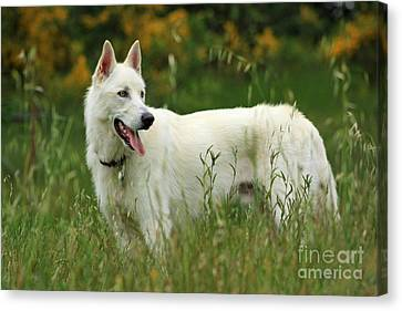 Canvas Print featuring the photograph Day At The Dog Park by Tyra  OBryant