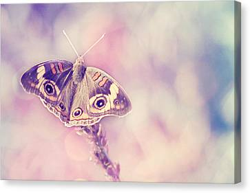 Day Dream Canvas Print by Amy Tyler