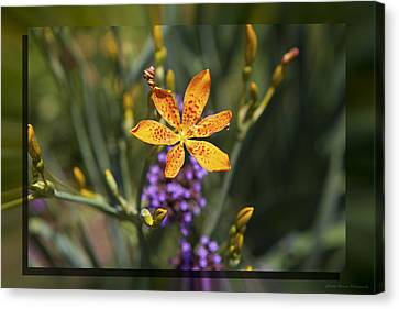 Day Lilly 46 Canvas Print by Charles Warren