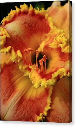 Day Lilly I Canvas Print