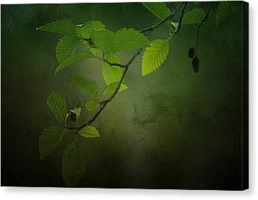 Daybreak Tiptoes In Canvas Print by Bonnie Bruno
