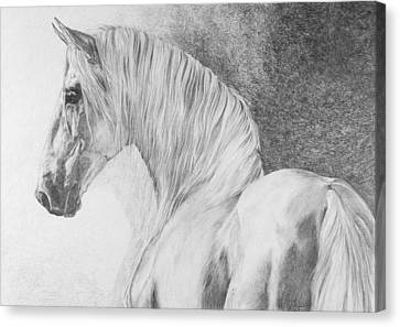 Friesian Horse Canvas Print - 'daydreaming' by Sue  Miles