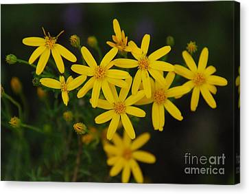 Canvas Print featuring the photograph Dbg 041012-0281 by Tam Ryan