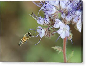 Canvas Print featuring the photograph Dbg 041012-0310 by Tam Ryan