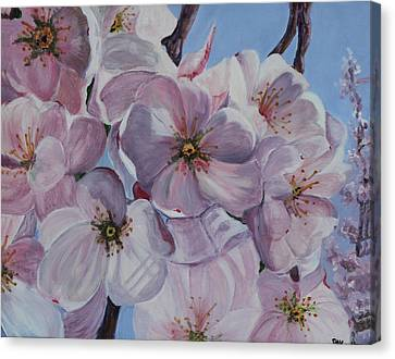 Dc Cherry Blossoms Canvas Print
