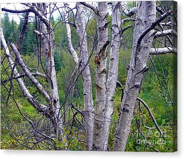 Canvas Print featuring the photograph Dead Birch Tree by Jim Sauchyn