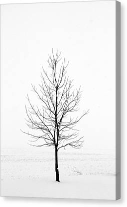 Dead Of Winter Canvas Print by Doug Hockman Photography