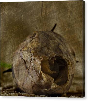 Canvas Print featuring the photograph Dead Rosebud by Steve Purnell