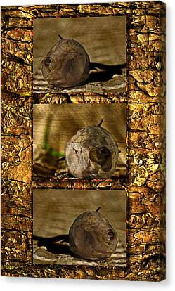 Canvas Print featuring the photograph Dead Rosebud Triptych by Steve Purnell