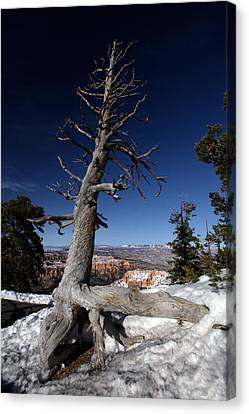 Canvas Print featuring the photograph Dead Tree Over Bryce Canyon by Karen Lee Ensley