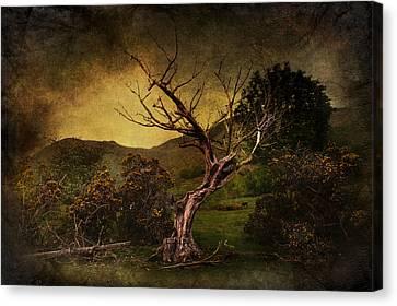 Bare Trees Canvas Print - Dead Tree by Svetlana Sewell