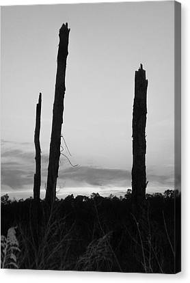 Dead Trees Against The Evening Skies Canvas Print by Floyd Smith