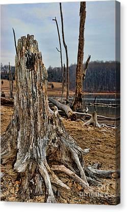 Dead Wood Canvas Print by Paul Ward
