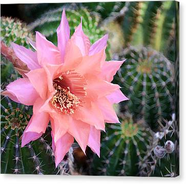 Decked Out In Pink Canvas Print by Diane Wood