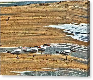 Dee-tern-mined Canvas Print by William Fields