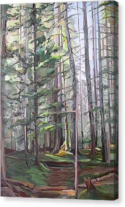 Deep Forest Canvas Print by Synnove Pettersen