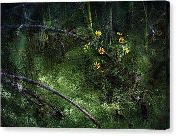 Deep Into Nature Canvas Print by Bonnie Bruno