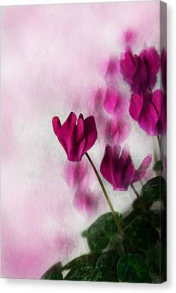Deep Pink Cyclamen Canvas Print by Jacqi Elmslie