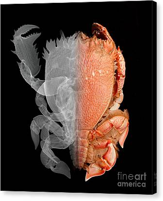 Deep Water Crab X-ray And Optical Image Canvas Print by Ted Kinsman