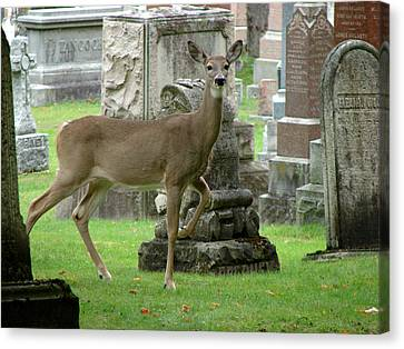 Deer Among The Headstones Canvas Print
