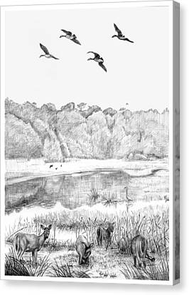 Deer And Geese - Lake Mattamuskeet Canvas Print by Tim Treadwell