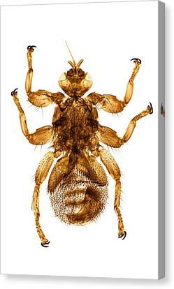 Deer Fly, Light Micrograph Canvas Print