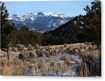 Canvas Print featuring the photograph Deer Herd by Marta Alfred