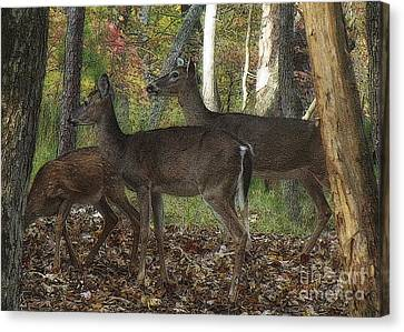 Canvas Print featuring the photograph Deer In Forest by Lydia Holly