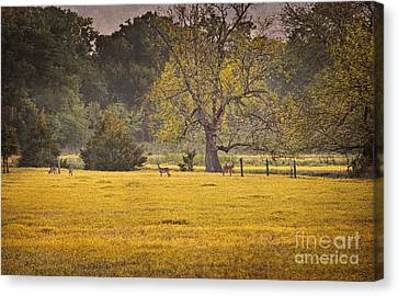 Canvas Print featuring the photograph Deer In Spring Meadow by Cheryl Davis