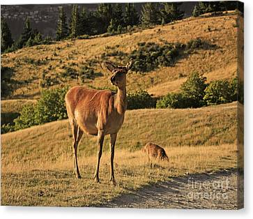 Deer On Mountain 2 Canvas Print by Pixel Chimp