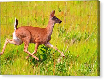 Deer Prancing In The Field Canvas Print by Wingsdomain Art and Photography