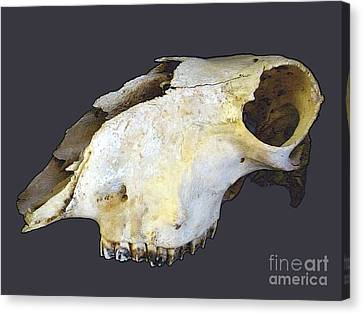 Deer Skull Canvas Print by Renee Trenholm