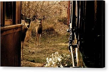 Deer Train Yard In Golden Canvas Print by Travis Burns