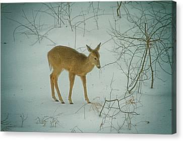 Deer Winter Canvas Print by Karol Livote