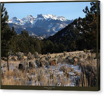 Deer With Cimmaron Mountain Backdrop Canvas Print by Marta Alfred