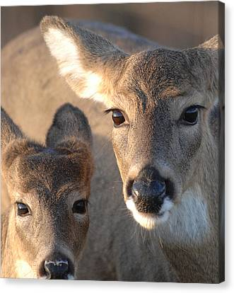 Deer With Young Canvas Print