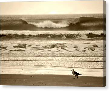 Canvas Print featuring the photograph Deliberate Solitude by Kelly Nowak