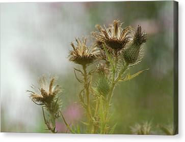 Canvas Print featuring the photograph Delicate Balance by Tam Ryan