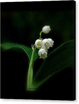 Canvas Print featuring the photograph Delicate Beauty by Marija Djedovic